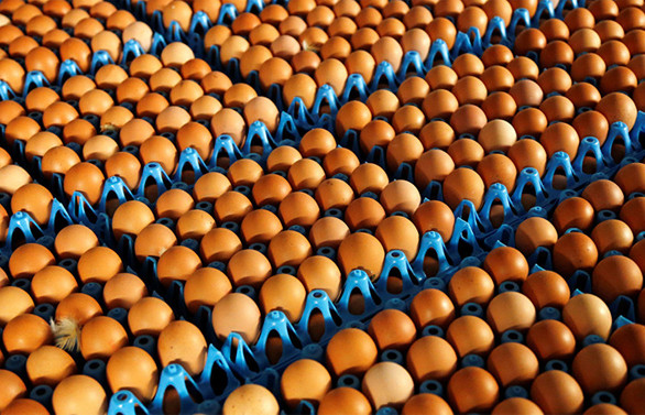 Yumurta üretimi kasımda düştü