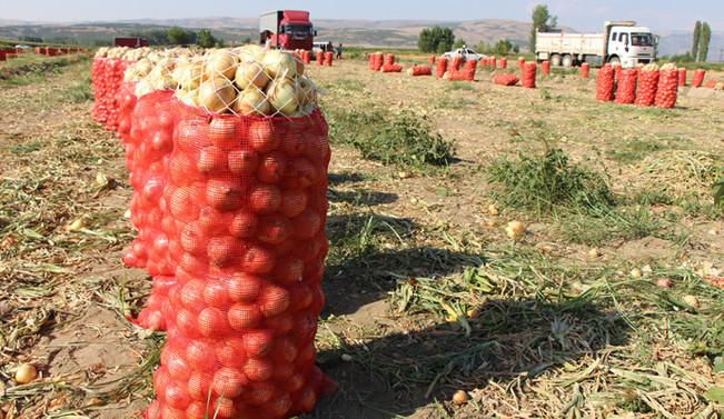 CHP'li Sarıbal: Üretici soğan üretmekten vazgeçti