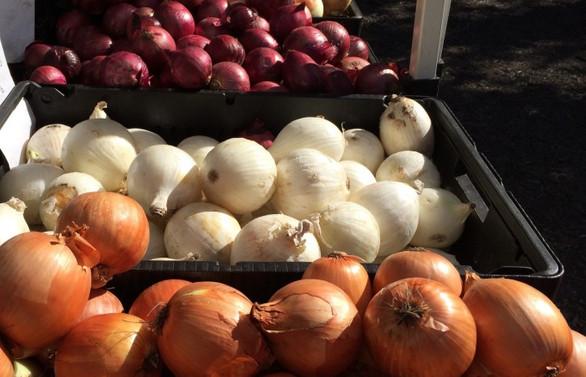 Soğan fiyatlarında düşüş bekleniyor