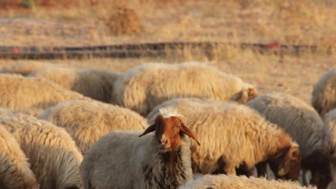İran'da kırmızı et krizi