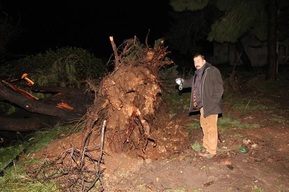 Mersin'de hortum ağaçları yerinden söktü