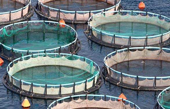 Su ürünlerinde kanun dışı avlanma ve üretime 50 bin liraya kadar ceza