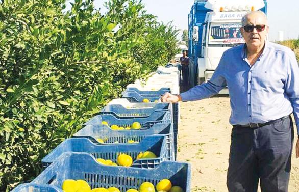 Adana narenciye üreticileri meyve sineğini yendi