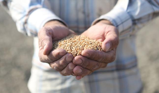 Ekolojik ürünler kooperatif aracılığıyla tüketiciye ulaşacak