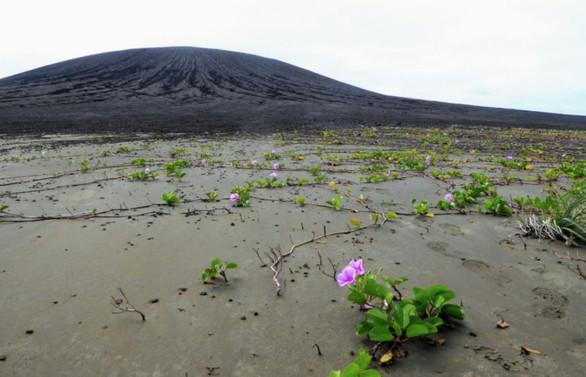 NASA araştırdı: Dünyanın en yeni adasında hayat belirtileri
