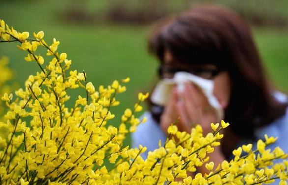 Meteoroloji polen tahmininde bulunacak