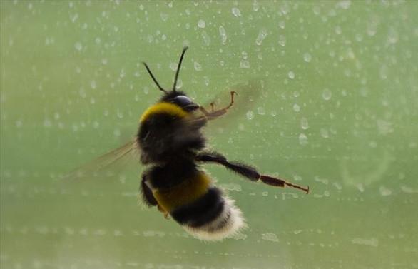 Arı araştırmaları için yarım milyon dolar bağış