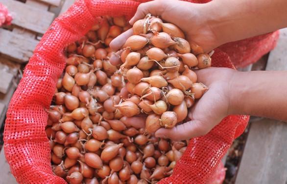 Gümrüksüz soğan ithalat süresi 1 ay uzatıldı