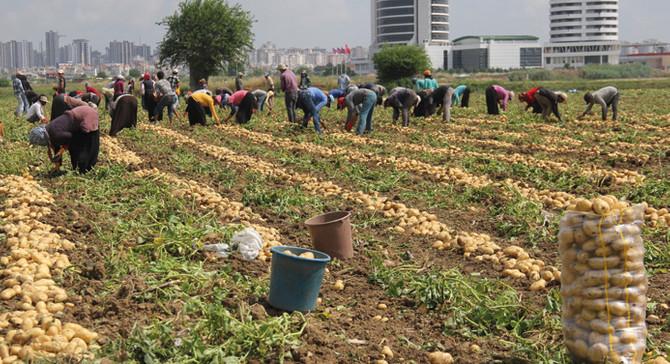 Pakdemirli: Türkiye, patates üretiminde dünyada ilk 10 içerisinde