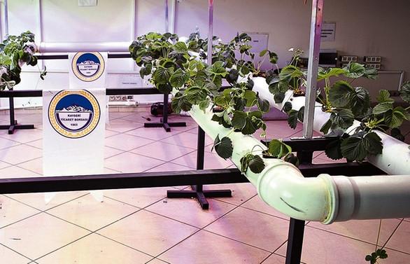 Kayseri'de topraksız tarım için model çalışma yürütülüyor