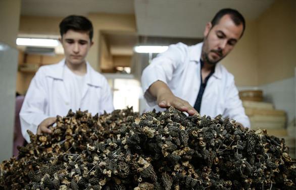 'Kuzu göbeği'nin kilogramı 250 euroya ihraç ediliyor