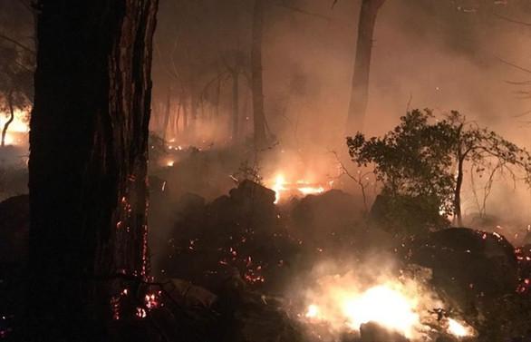 Pakdemirli: Muğla'daki yangın kontrol altında