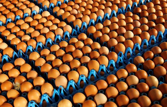 Tavuk yumurtası üretimi, mayısta yüzde 1,2 azaldı