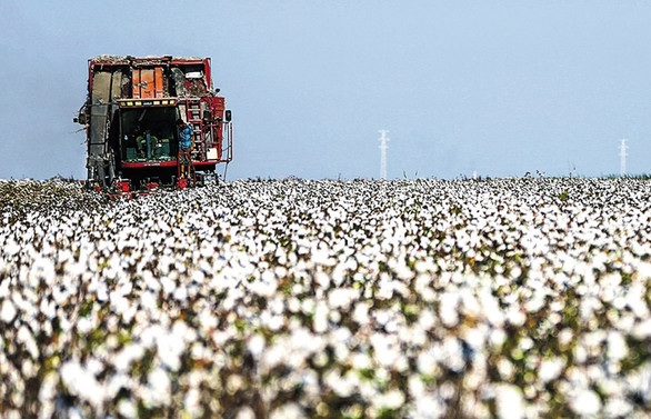 Sudan'da ortak tarım projesi başlamadan sona erdi