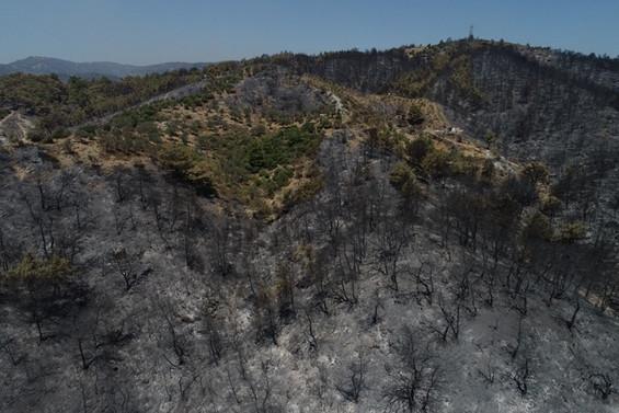 İzmir'deki orman yangınına müdahale sürüyor