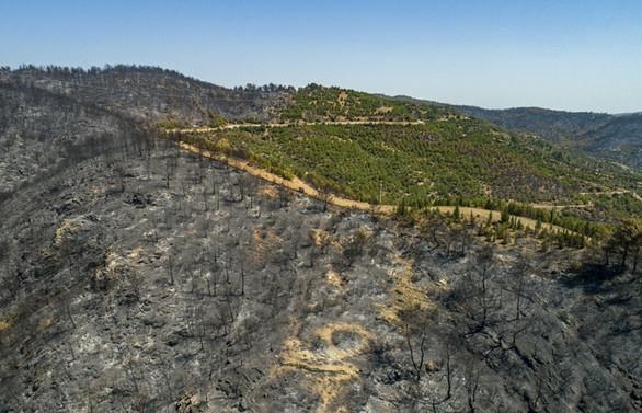 İzmir'de 3 gün süren yangının ardından hasar tespit çalışmaları başladı