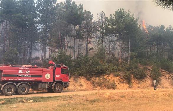 Uşak'ta ormanlık alanda yangın çıktı