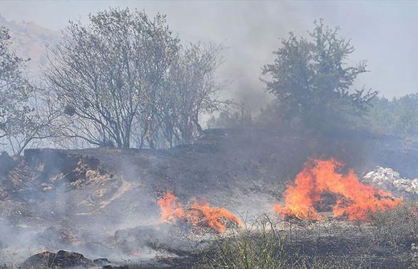 Manisa'da yaklaşık 300 zeytin ağacı yandı