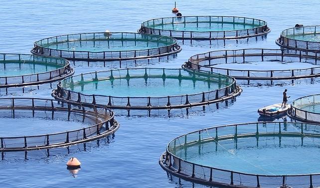 Balıkçılıkta uygulanan para cezalarında düzenleme yapıldı