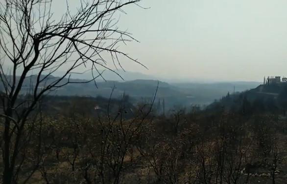 Suriye'de orman yangınları: 2 ölü, 70 yaralı