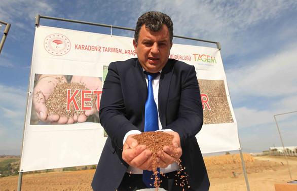 Türkiye'nin ilk yerli keten tohumu Yılmaz toprakla buluştu