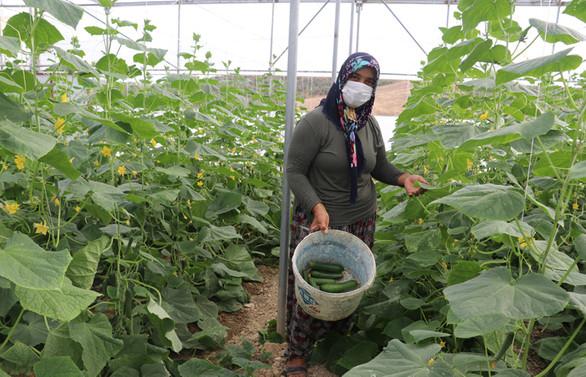 Kadın çiftçi devlet desteğiyle üretime katkı sağlıyor