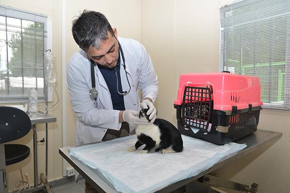 Yıldırım Belediyesi, 20 bin hayvanı tedavi etti