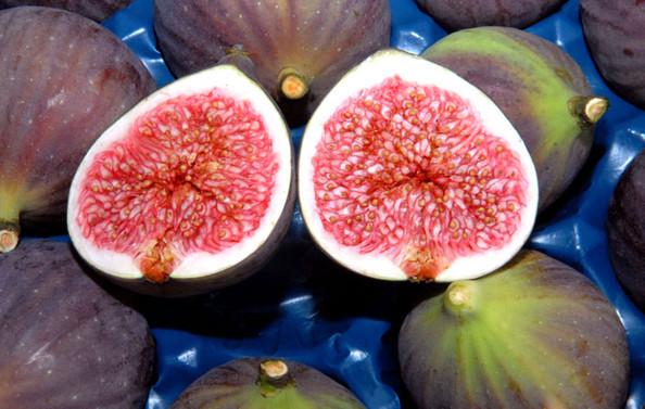 Bursa siyah incirinin kente katkısı artırılacak