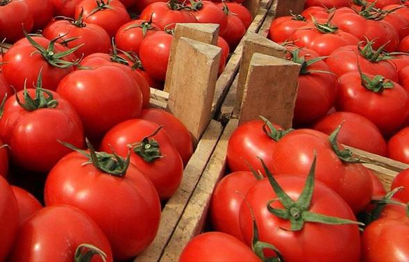 Rusya'nın domates kararı sevindirdi