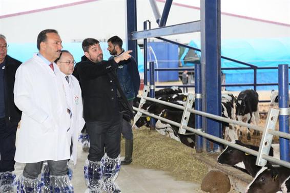 Şap aşılama kampanyası Yenişehir'den başladı