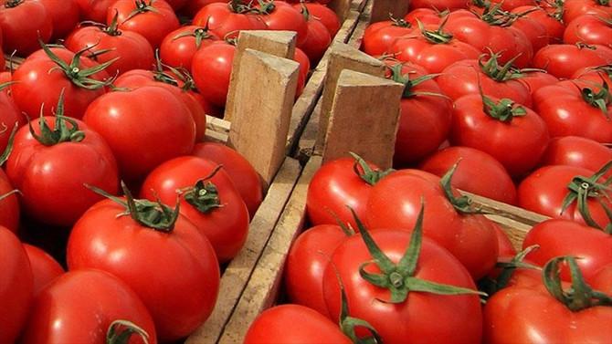 Domates ihracatı ilk çeyrekte yüzde 10 arttı