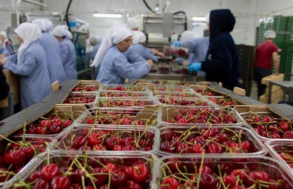 Rusya'dan yaş meyve sebzede zararlı uyarısı