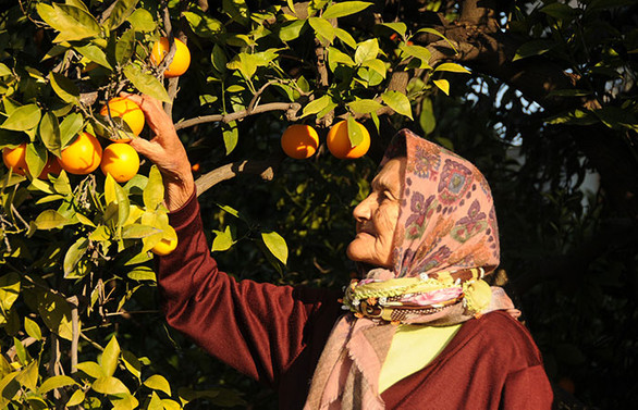65 yaş üstü çiftçilerin fazlalığı üretimi aksatıyor