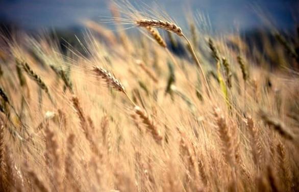 Tarımsal ticarette kısıtlamalar gıda güvenliğine tehdit
