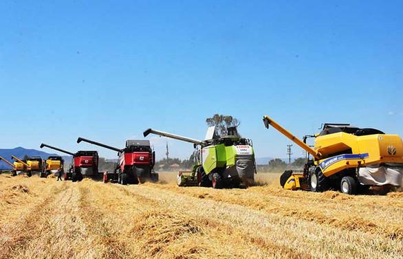 Sezonun ilk buğday hasadı başladı