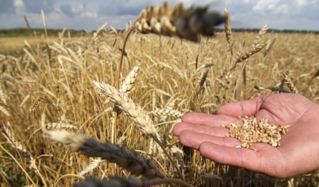 TÜİK'in bitkisel üretim tahmini ne kadar gerçekçi?