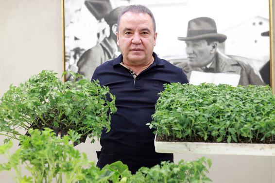Antalya Büyükşehir Belediyesi çiftçilere 40 bin adet fide dağıttı