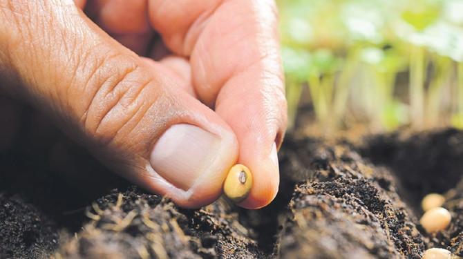 Hububat, bakliyat ve yağlı tohumlarda 2020 üretimi ve iklimin etkileri