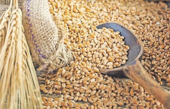 Buğdayda kriz endişesi ticaret dinamiklerini değiştiriyor