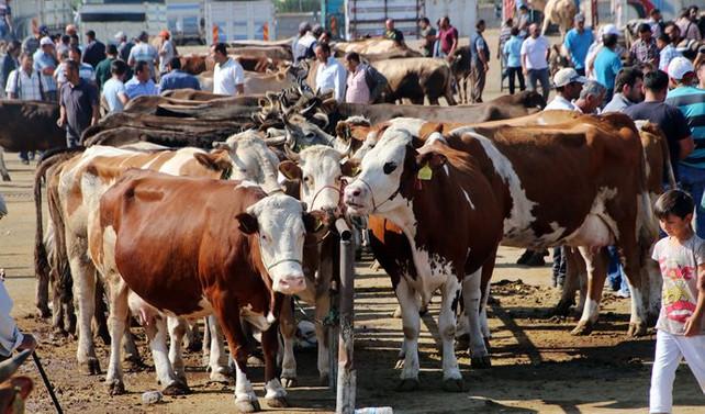 Hayvan satış yerleri için şartlar belirlendi