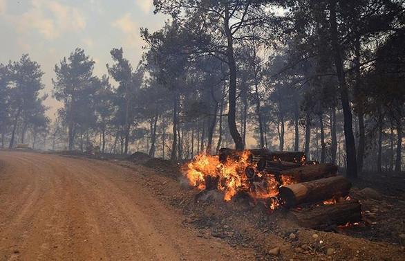 Gelibolu'da yangın söndürme çalışmaları sürüyor
