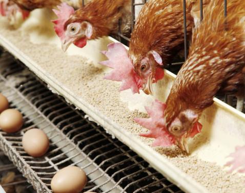 Yumurta üretimi haziranda yüzde 8,5 azaldı