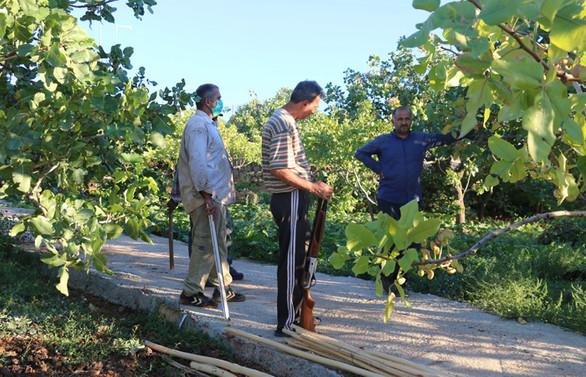 Siirt'te fıstık üreticileri hırsızlara karşı nöbet tutuyor