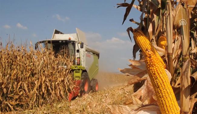 AB, mısır ithalatına uygulanan tarifeyi düşürdü