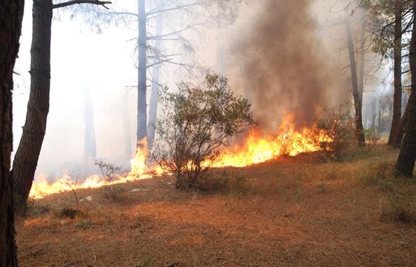 İstanbul'da Aydos Ormanı'nda yangın