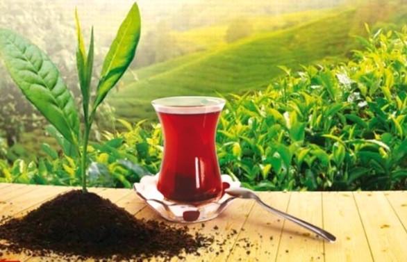 Türkiye'den 103 ülkeye 10,8 milyon dolarlık çay ihracatı