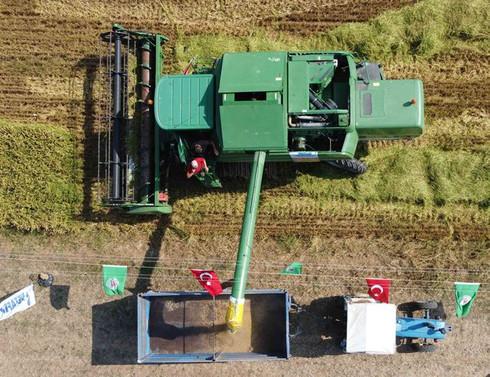 Bafra Ovası'nda çeltik hasadına başlandı, rekolte beklentisi 107 bin ton