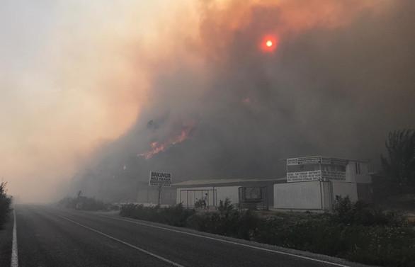 Aydın ve İzmir'de orman yangınları