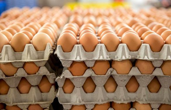 Yumurta ihracatı geriledi, Irak'a alternatif pazar aranıyor