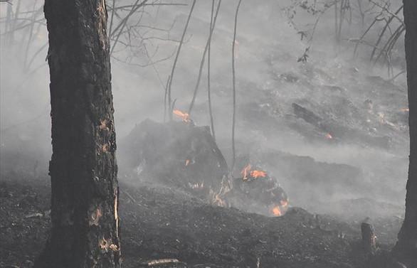 Bakan Pakdemirli: 11 orman yangınının 10'unu kontrol altına aldık